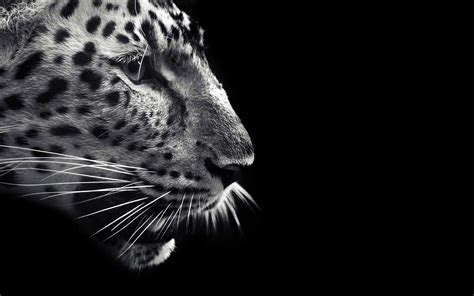 Black And White Animal Wallpaper - black and white animals wallpapers high quality