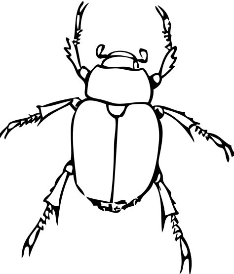 beetle clipart black and white dragonfly clipart black and white clipart panda free