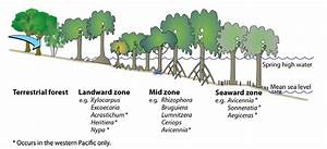 1 The Three Zones Typical Of Mangrove Habitats In The