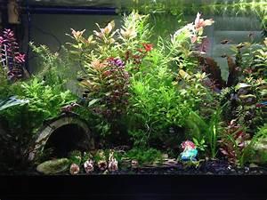 Die Besten Aquarien : die besten 25 aquariumbeleuchtung ideen auf pinterest ~ Lizthompson.info Haus und Dekorationen