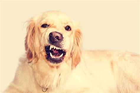 dog trainer   prevent aggression