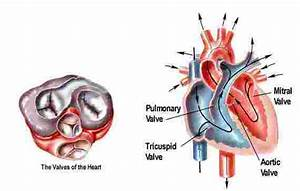 What is mitral stenosis? Staten Island Heart - Board ...
