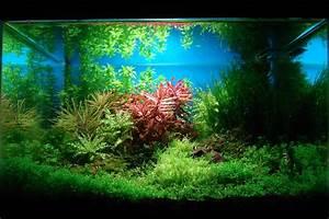 Aquarium Einrichten Beispiele : aquascaping naturaquarium und aquariengestaltung ~ Frokenaadalensverden.com Haus und Dekorationen