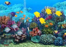 Living Marine Aquarium 2 Animated Wallpaper - all top wallpaper
