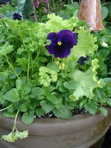 Growing Lettuce Plants Container