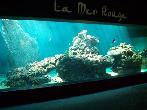 aquarium picture of aquarium le 7eme continent talmont