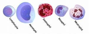Blood Cells  White Blood Cell Count