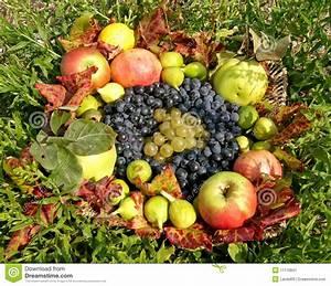 Panier A Fruit : panier de fruit d 39 automne image stock image 11116841 ~ Teatrodelosmanantiales.com Idées de Décoration