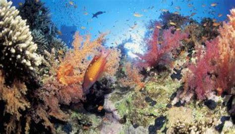 coral invertebrates examples reefs animals vertebrates getty stockbyte