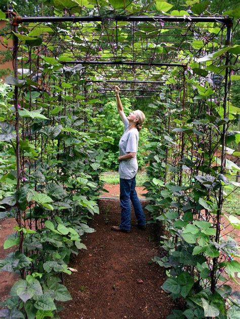 how to garden vegetable gardens easy ideas