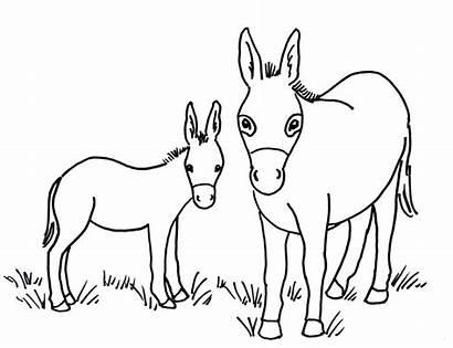 Donkey Coloring Drawing Head Getdrawings