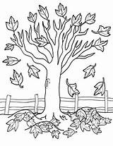 Tree Worksheet Coloring Fall Leaves Maple Nature Education Pages Trees Autumn Worksheets Sheets Sheet Colouring Falling Season Themed Kindergarten Losing sketch template