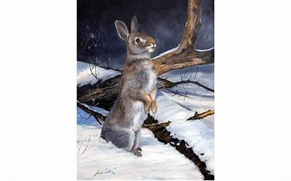 Cottontail Curious Paluh Artwork Wildlife Jack