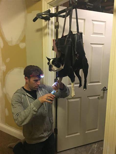 dad    brilliant method  trim dogs nails