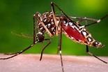 Aedes Aegypti: Meet the Mosquito Spreading Zika Virus ...