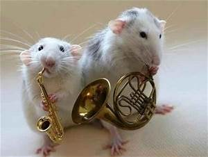 cute, french horn, hamster, mice, mouse, sax - image #8222 ...