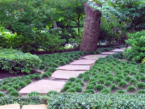 plants for shady area the best outdoor plants for shaded areas