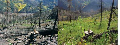 restoration rehabilitation colorado state forest service
