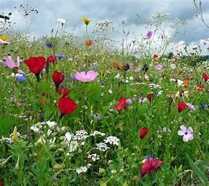 Wiese Mit Blumen : bunte blumenwiese blumen wiese blumenwiese und ~ Watch28wear.com Haus und Dekorationen