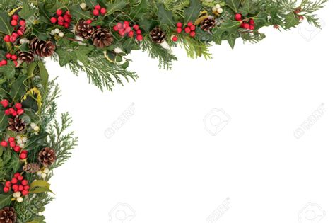 christmas ivy border festival collections