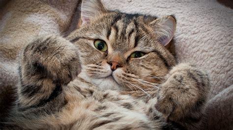 for cats free cat wallpaper free downloads 10508 wallpaper walldiskpaper