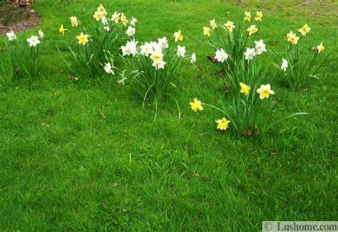 spring garden design ideas flower beds  evergreen