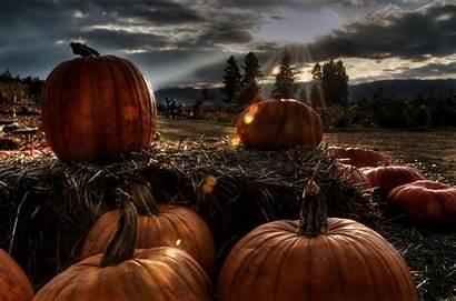Halloween Pumpkin Pumpkins Orange Dark Gifts Sky