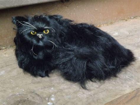 black persian cat life  prop realistic fake cat