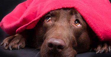 homoeopathie fuer hunde arnica bei koerperlicher