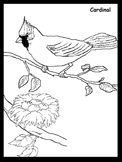 cardinal coloring pages printable coloring home