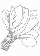 Spinach Pages Vegetables Clipart Leaves Bunch Coloring Clip Colouring Printable Vegetable Bestcoloringpages Drawing Fruit Drawings Leaf Sheets Fruits Books Outline sketch template