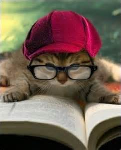 nerdy cat names nerdy cat names epic tech comic names
