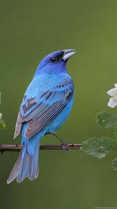 Bing Bluebird Eastern Wallpapers Desktop Background