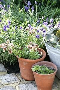Lavendel Pflanzen Balkon : lavendel auf dem balkon kultivieren so gedeiht er am besten ~ Lizthompson.info Haus und Dekorationen