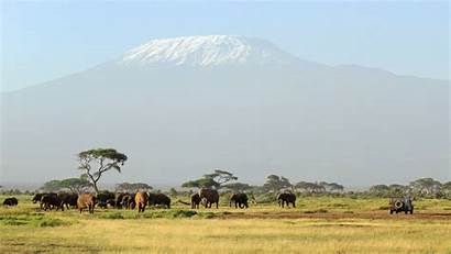 Safari Wallpapers Kilimanjaro