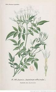 1000 idees sur le theme plant de jasmin sur pinterest With marvelous idee de plantation pour jardin 4 cultiver la vigne en pot