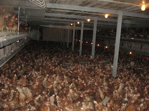what is a cage free egg free range not as free as you think powered by produce