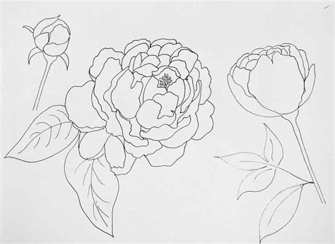 peony patterns  paint  blog