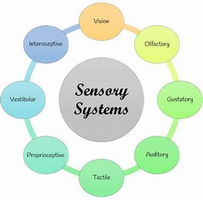 Senses Sensory System Diagram