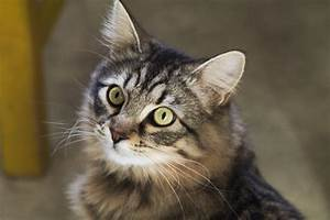 Free Images : animal, kitten, feline, fauna, whiskers ...
