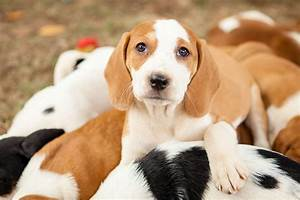 Puppies Reach 'Peak Cuteness' in Time for Adoption