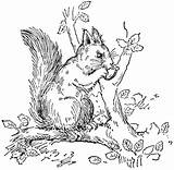 Squirrel Coloring Pages Tree Animals Wildlife sketch template