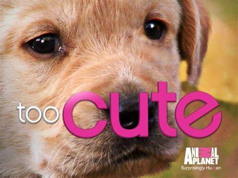 Too Cute Season 1 Episode 2 Too Cute