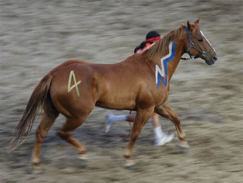 native american horses horse indian indians pony painted omak stampede americans war night ponies mon blu walking