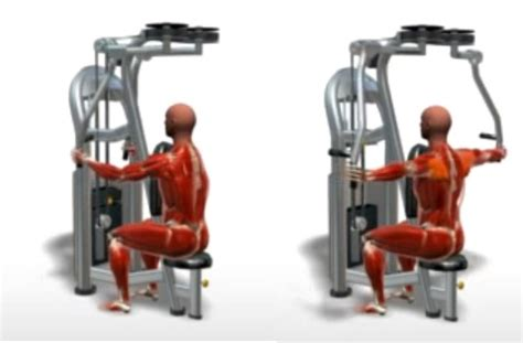 Pec Deck Exercise Without Machine by Machine Rear Deltoid Fly Bodybuilding Wizard