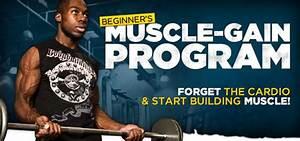 Beginner U0026 39 S Muscle