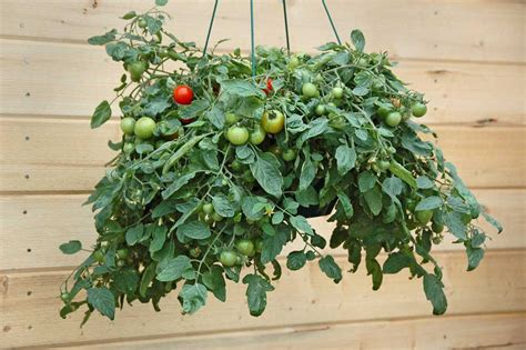 container gardening ideas  limited space homescornercom