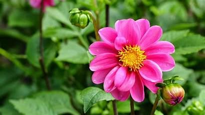 Cantik Bunga Sakura Gambar Jepang Kata Avante