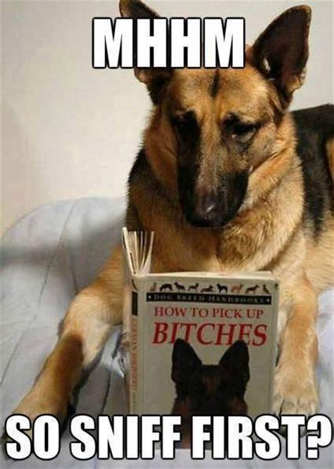 Best Animal Memes - best animal memes of all time www imgkid com the image kid has it