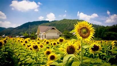 Summer Flowers Sun Wallpapers Pixelstalk